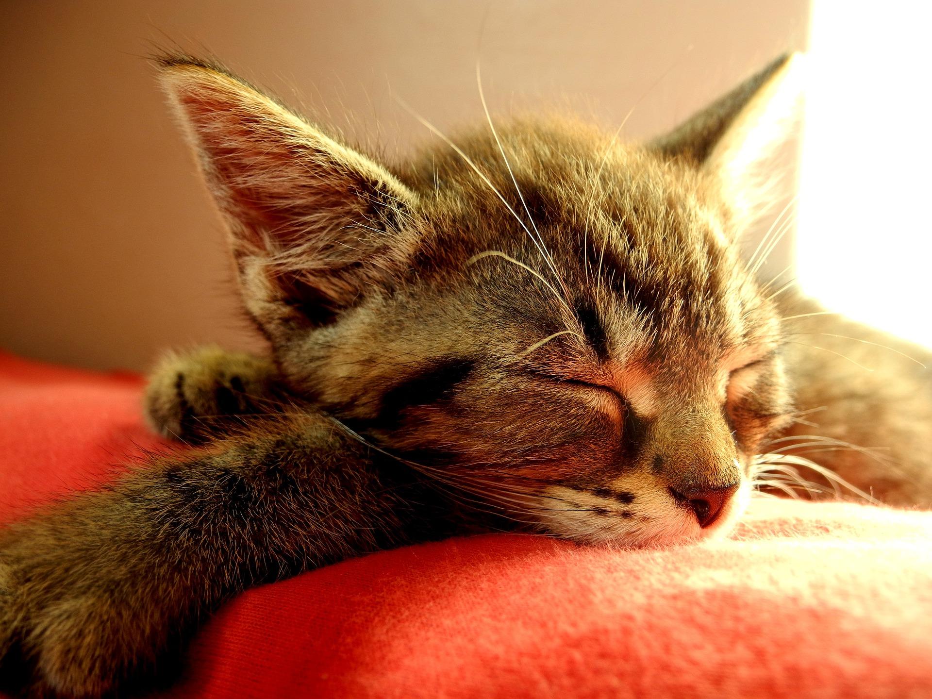 cat-1503243_1920