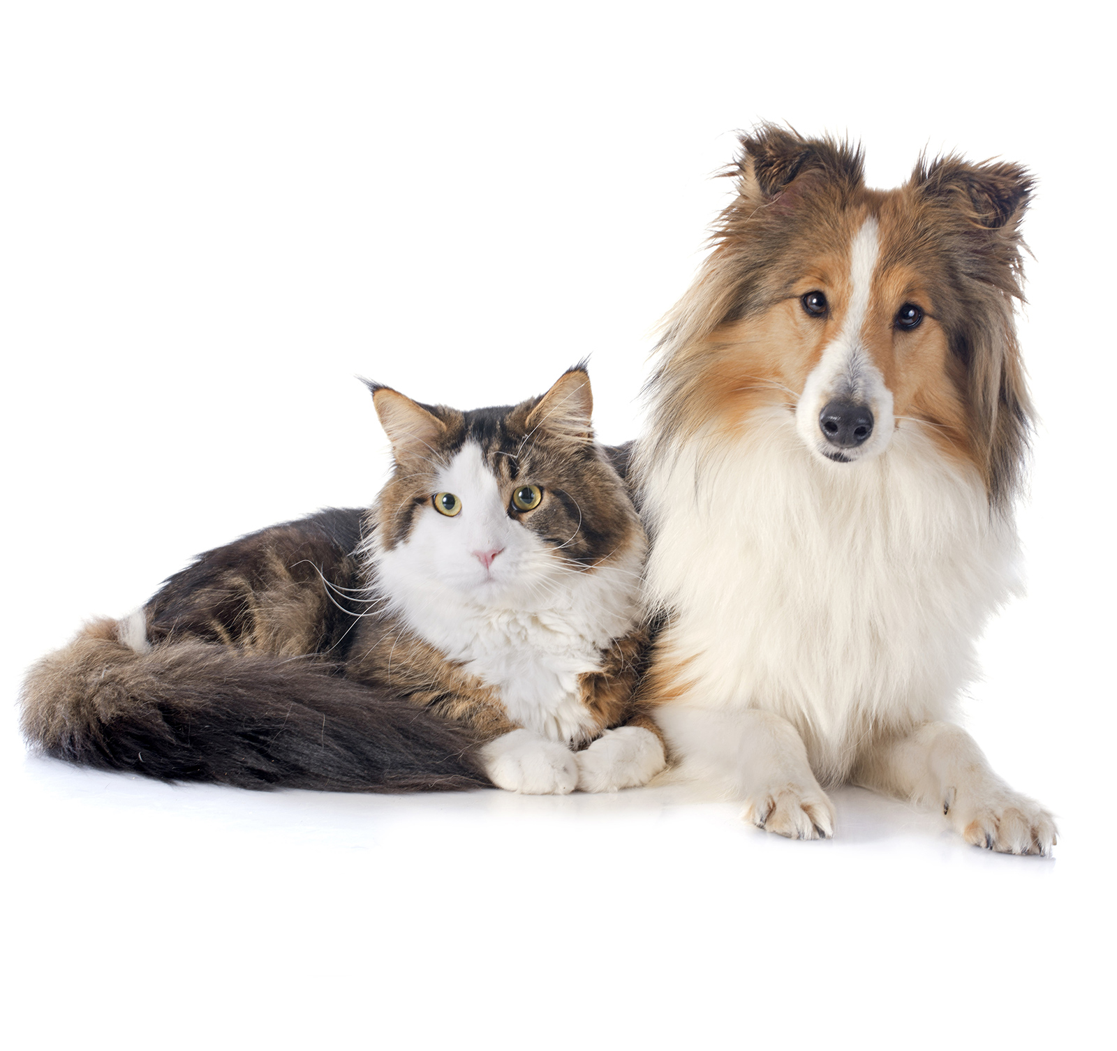 Manchester Veterinary Specialists |